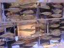 Mooi 'Sfeer&Meer' Kennemervis
